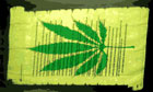 Marijuana Scroll Declaration Banner LAST ONE